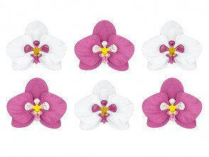 Aloha Paper Decoration Orchids